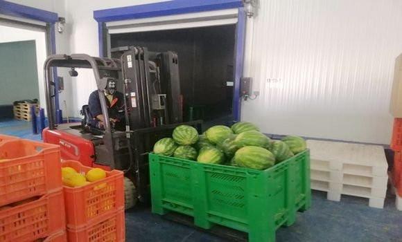 Pastèques Melons El Oued France Exportations