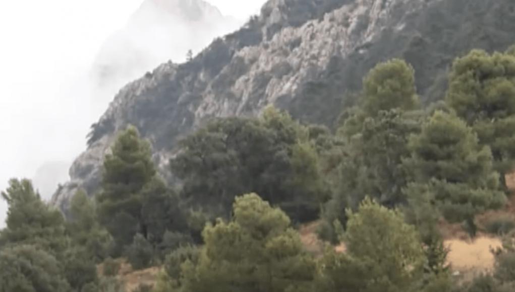Chems Eddine Chitour veut développer la filière Bois énergie en Algérie