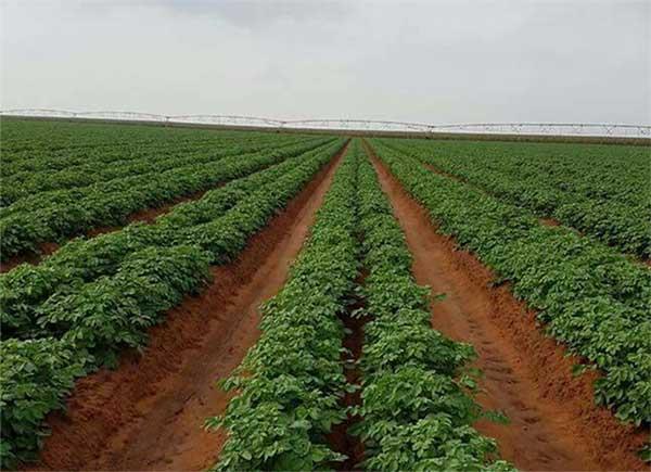 agriculture dans le sud algérien