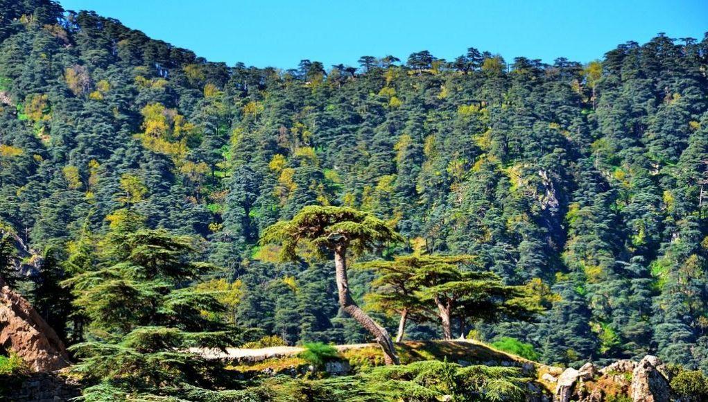 forêt de liège à Théniet El Had en Algérie
