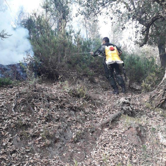 Terres sinistrées suite à incendies en Algérie